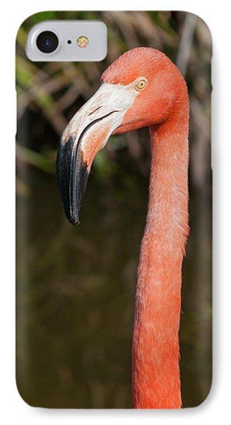Usa, Florida American Flamingo IPhone Case by Michael Defreitas
