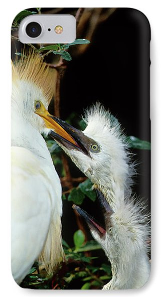Usa, Florida Cattle Egret Feeds One IPhone Case by Jaynes Gallery