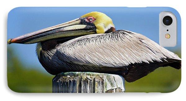 Usa, Florida, Everglades City, Big IPhone Case by Jaynes Gallery