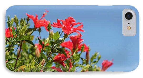 Usa, Florida, New Smyrna Beach, Hibiscus IPhone Case by Lisa S. Engelbrecht