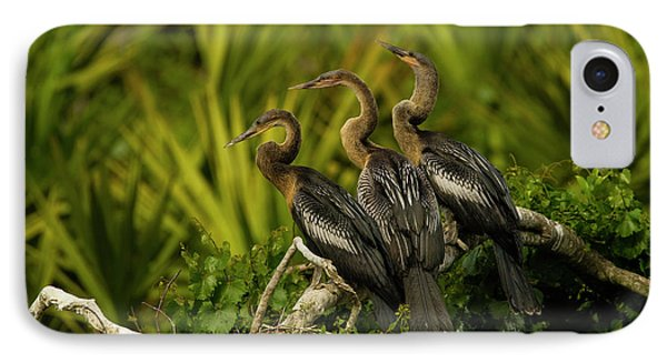 Usa, Florida, Orange County, Gatorland IPhone Case by Jaynes Gallery