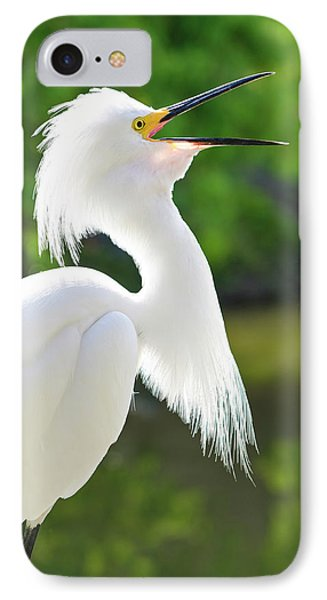 Usa, Florida Snowy Egret (egretta Thula IPhone Case by Michael Defreitas