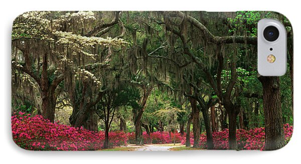 Usa, Georgia, Savannah, Road Lined IPhone Case by Adam Jones