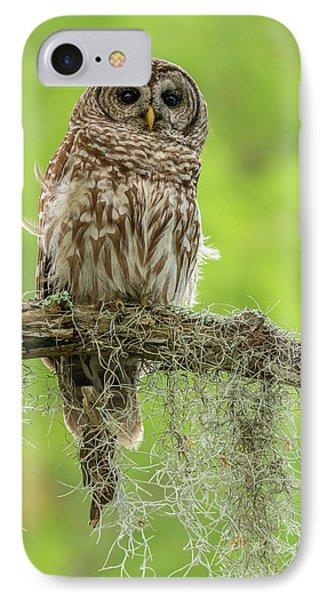 Usa, Louisiana Barred Owl On Tree Limb IPhone Case