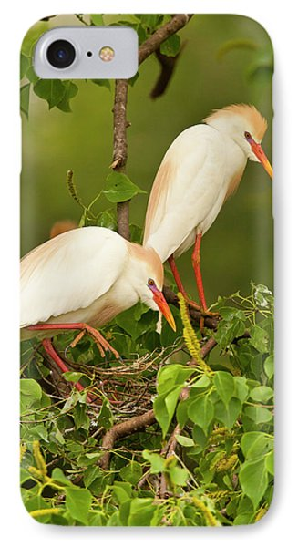 Usa, Louisiana, Jefferson Island IPhone Case by Jaynes Gallery