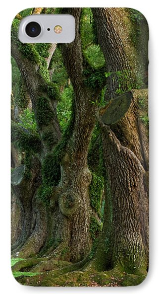 Usa, Louisiana, St IPhone Case by Jaynes Gallery