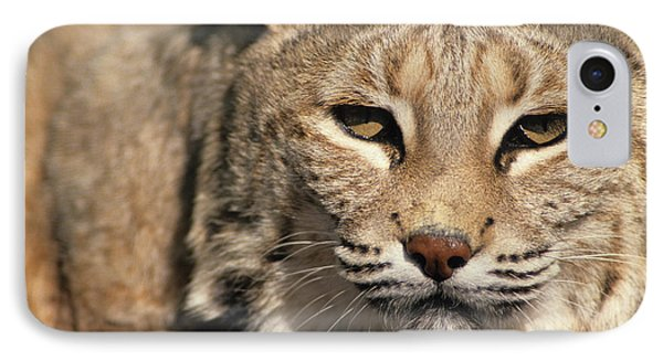 Usa, Lynx, New Mexico IPhone Case by Gerry Reynolds