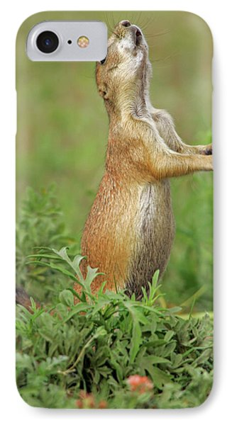 Usa, Nebraska, Fort Niobrara National IPhone Case