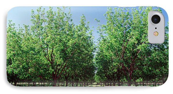 Usa, New Mexico, Tularosa, Pecan Trees IPhone Case by Panoramic Images