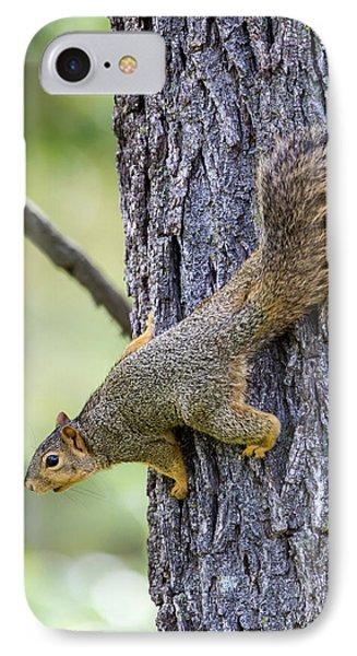 Usa, Ogle County, Illinois, Eastern Fox IPhone Case