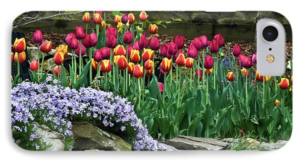 Usa, Ohio Tulips And Phlox IPhone Case