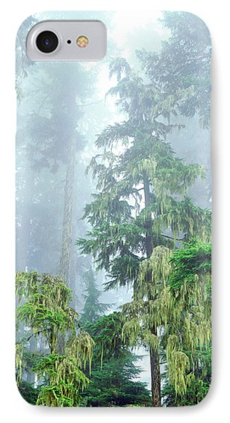 Usa, Oregon, Old-growth Douglas Fir IPhone Case by Jaynes Gallery