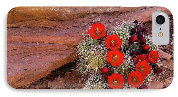 Usa, Utah, Cedar Mesa IPhone Case by Charles Crust