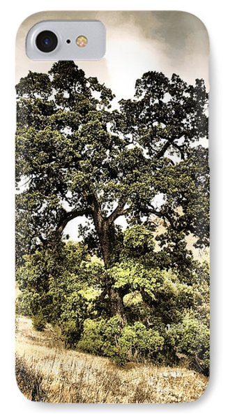 Valley Oak IPhone Case
