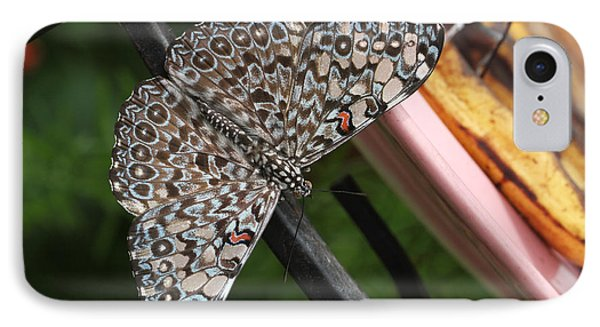 IPhone Case featuring the photograph Variable Craker Butterfly #2 by Judy Whitton