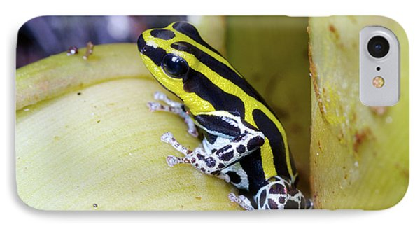 Variable Poison Frog IPhone Case by Dr Morley Read