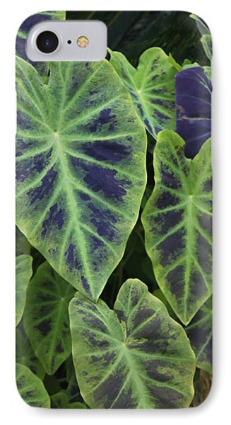 Variegated Elephant Ears IPhone Case by Suzanne Gaff