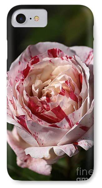 IPhone Case featuring the photograph Variegated Rose by Joy Watson