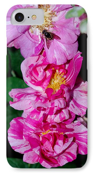 IPhone Case featuring the photograph Variegated Roses by Adria Trail