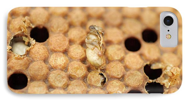 Honeybee iPhone 7 Case - Varroatosis by Uk Crown Copyright Courtesy Of Fera/science Photo Library