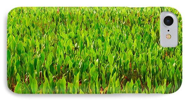 Vegetation, Boynton Beach, Florida, Usa IPhone Case by Panoramic Images