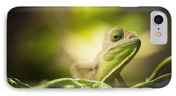 Veiled Chameleon Is Watching You IPhone Case by Bradley R Youngberg