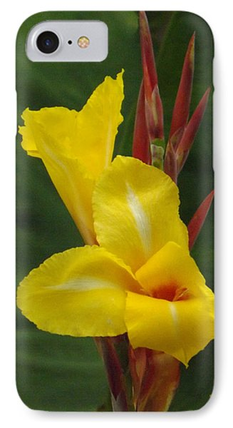 Velvety Yellow Iris  IPhone Case by Brenda Brown