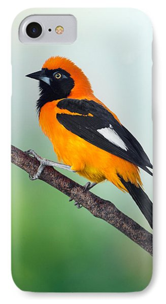 Venezuelan Troupial Icterus Icterus IPhone Case by Panoramic Images