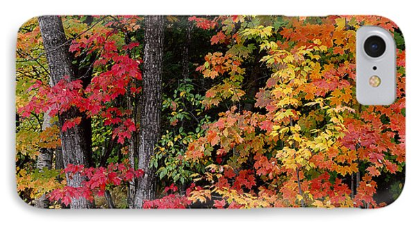 IPhone Case featuring the photograph Vermont October Woods by Alan L Graham