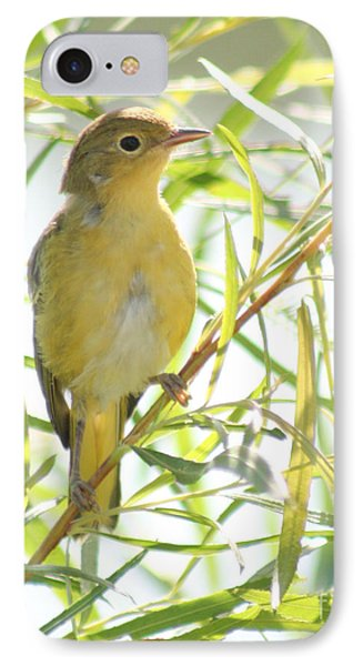 IPhone Case featuring the photograph Very Yellow Warbler by Anita Oakley