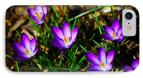 Vibrant Crocuses Phone Case by Karol Livote