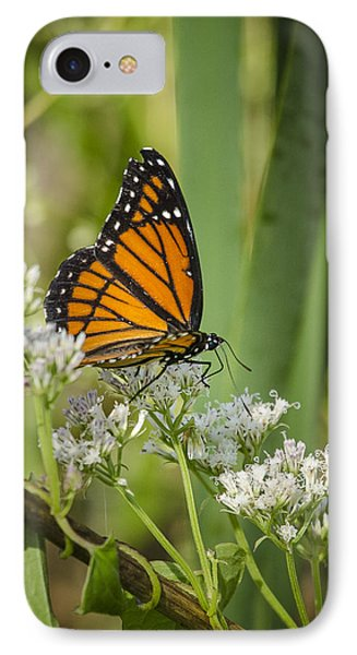IPhone Case featuring the photograph Viceroy 2 by Bradley Clay