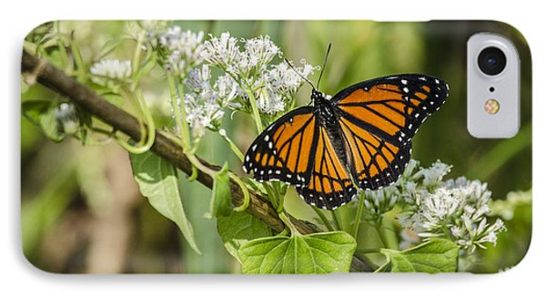IPhone Case featuring the photograph Viceroy Butterfly by Bradley Clay
