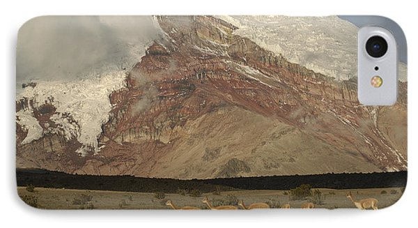Vicuna Herd Grazing At Mt Chimborazo IPhone Case
