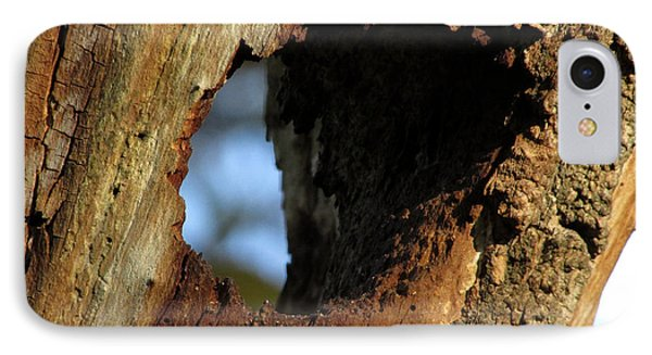 View Through A Tree IPhone Case by Kimberly Mackowski