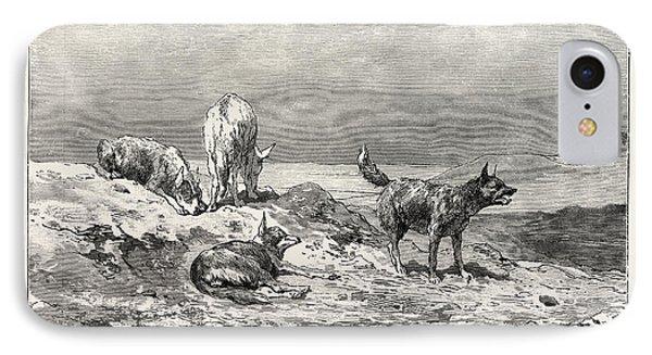 Village Dogs. Egypt IPhone Case