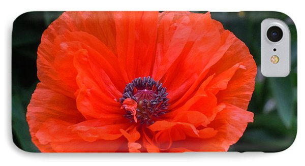 IPhone Case featuring the photograph Village Poppy by Francine Frank