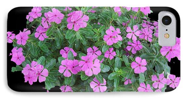 Vinca Plant IPhone Case