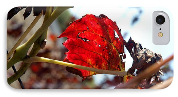 IPhone Case featuring the photograph Vine Leaf At Fall. 02 by Arik Baltinester