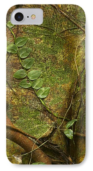 IPhone Case featuring the photograph Vine On Tree Bark by Stuart Litoff