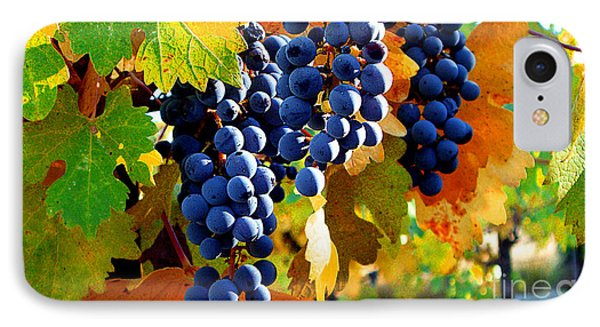 Vineyard 2 IPhone Case by Xueling Zou
