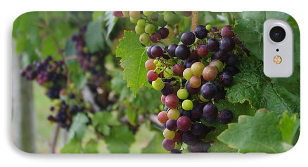 Vineyard Colors IPhone Case by Greg Graham