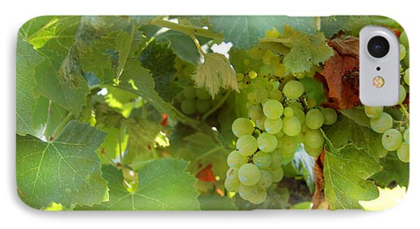 Vineyard IPhone Case by Gina Dsgn