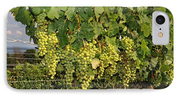 Green Grapes In Traverse City Michigan IPhone Case by Diane Lent