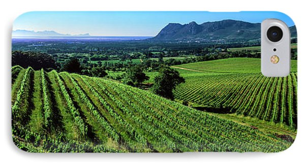 Vineyard, Klein Constantia, Constantia IPhone Case