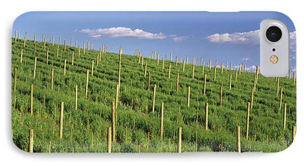 Vineyard, Napa County, California, Usa IPhone Case by Panoramic Images