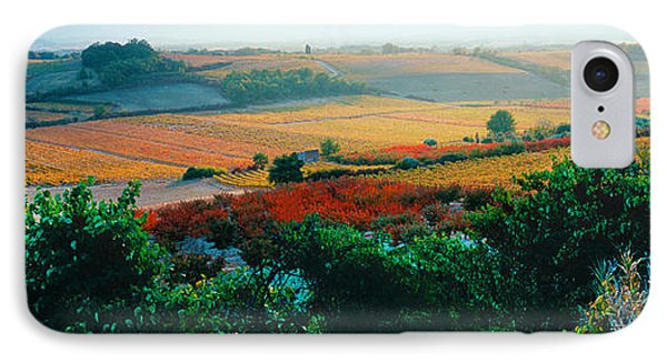 Vineyards In The Late Afternoon Autumn IPhone Case by Panoramic Images