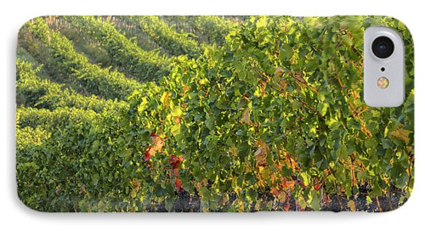 Vineyards In The Rolling Hills IPhone Case by Terry Eggers