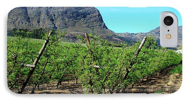 Vineyards Of Franschoek, Cape Wine IPhone Case by Miva Stock