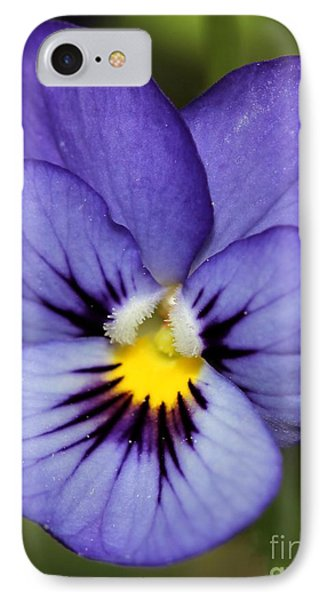 Viola Named Sorbet Blue Heaven Jump-up Phone Case by J McCombie